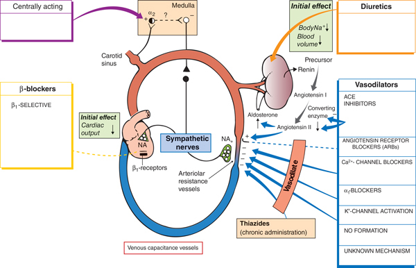 pharmacology corticosteroids asthma