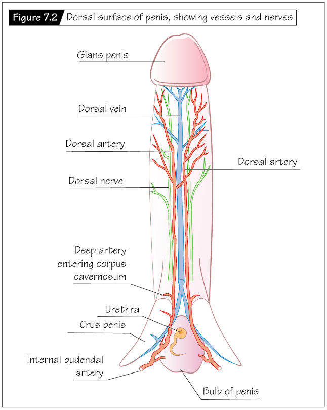 Heffner The Reproductive System At A Glance 4e
